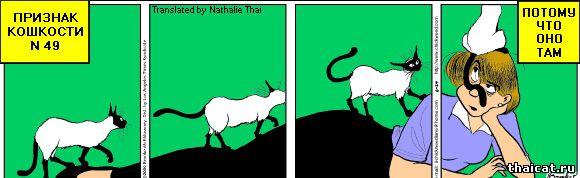 Признаки тайской кошкости