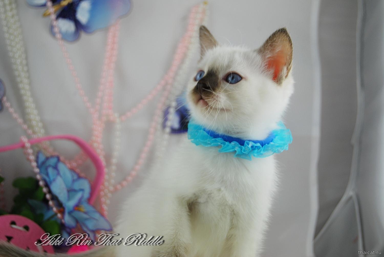 Дать объявление на российских сайтах по продаже котят дать объявление интернет сайт