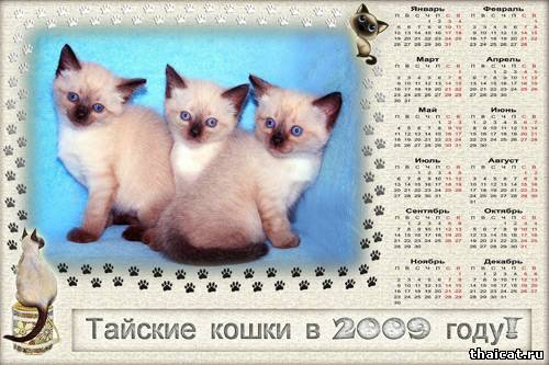 календарь на 2009 год с тайскими котятами