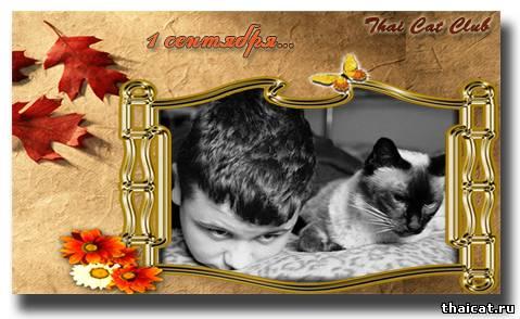 1 сентября, День Знаний, тайские кошки