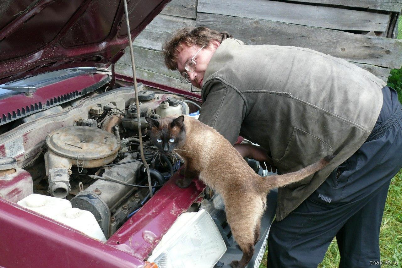 Починил машину и отодрал 3 фотография