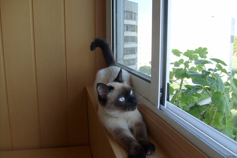 Гуляем на балконе.