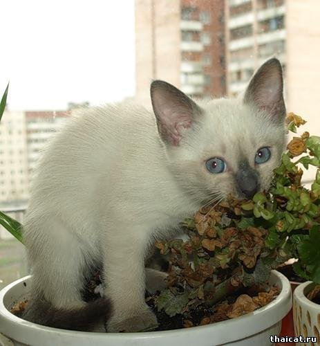 Урожай-2008: котята