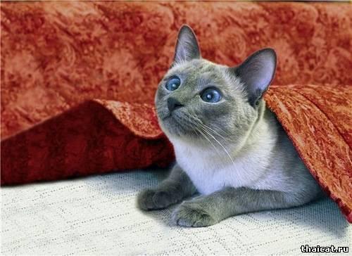 Кот, который зверел от красного. Поздравления!
