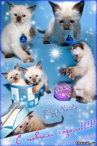 открытка новый год тайские котята