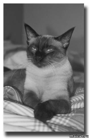 Назвал массаж кошкой