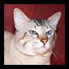 Питомник тайских кошек ThaiFleur