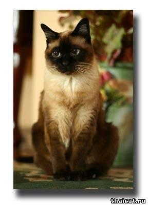 аллергия у кота на корм симптомы