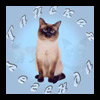 Питомник тайских кошек Тайская Легенда