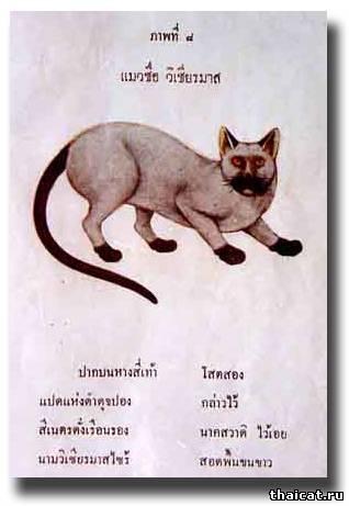 """Гравюра из The Smud Khoi (""""Книга поэм о кошках"""")"""