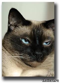 У больного хозяина - больные кошки