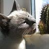 Список ядовитых растений для кошек
