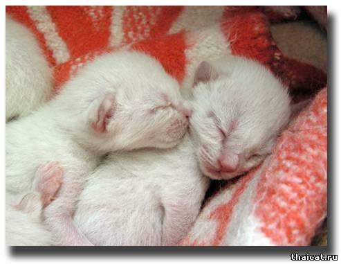 Новорожденные коты фото