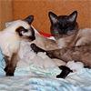 Беременность кошки: к чему быть готовым