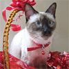 Как упаковать подарок, если рядом тайский кот!