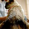 Иглоукалывание: лечение кошек