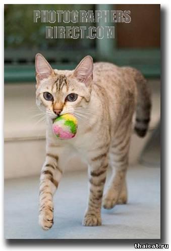 Дрессировка котят и кошек
