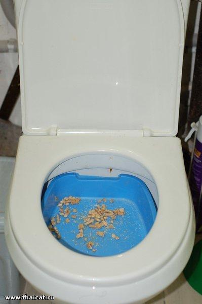 Re как приучить котёнка к туалету