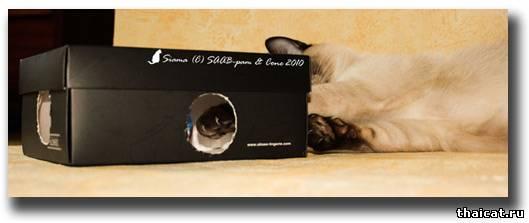 Игрушка для кошки за 10 мин воспитание