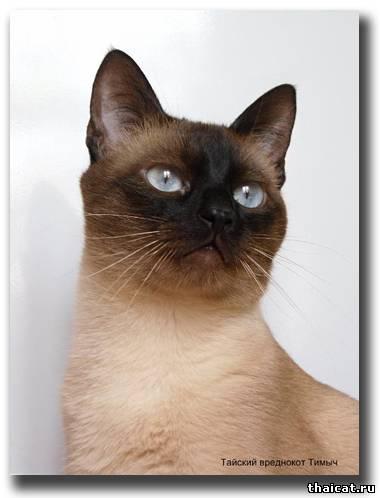Звуки На Которые Реагируют Кошки