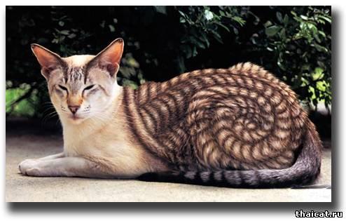 Картинки кошек и котят нарисованные