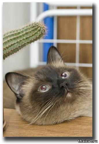 почему у котенка пахнет изо рта