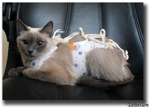 Клуб Тайских Кошек