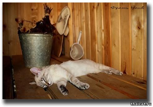 Уснула в бани фото 144-834