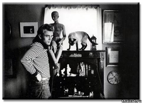 Джеймс Дин и его сиамский кот Маркус