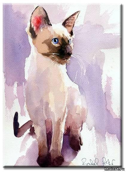 Рейчел Паркер. Сиамские кошки