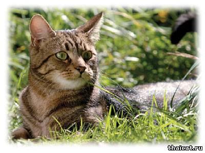 Мочекаменная болезнь - как защитить свою кошку от рецидива? Причины мочекаменной болезни