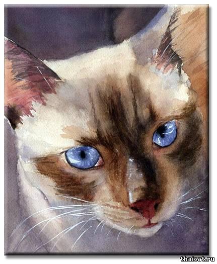 Рейчел Паркер. Тайские кошки