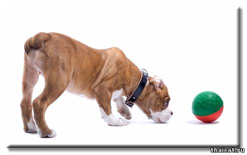 Остеоартроз у собак: стадии