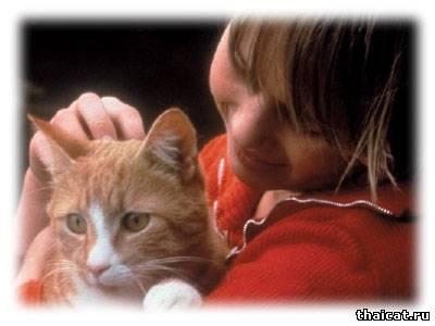 Мочекаменная болезнь - как защитить свою кошку от рецидива? Как свести риск к минимуму?