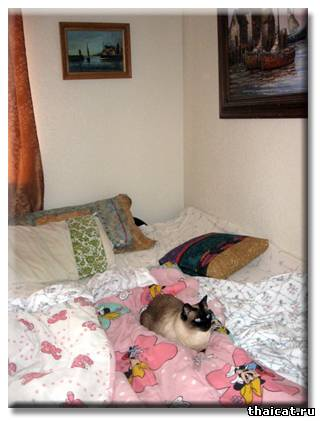Сиамский кот Бежик - Шаман, или победа разума над сарсапариллой