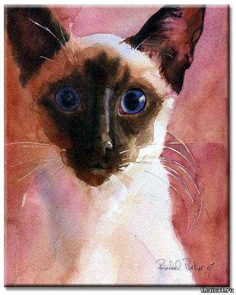 Рейчел паркер сиамские кошки