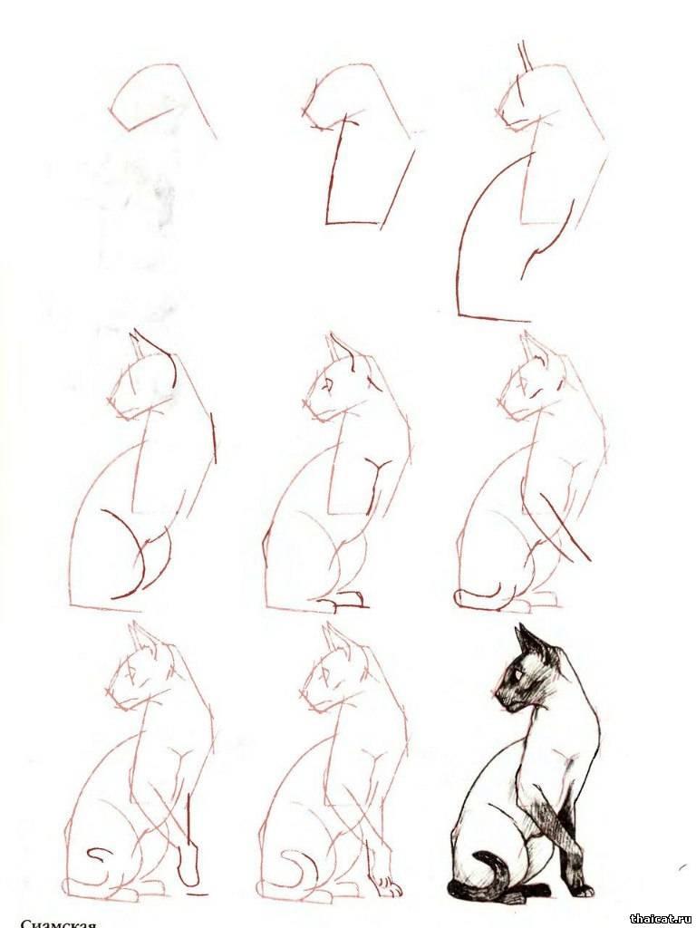схема рисования котенка