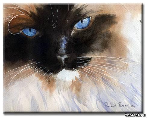 Рейчел Паркер. Кошки
