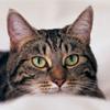 Мочекаменная болезнь - как защитить свою кошку от рецидива?