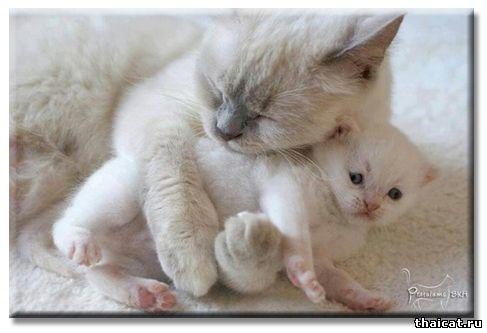 Почему кошка отказывается от своих котят?