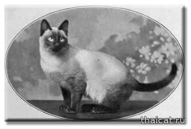 Сиамская кошка мистера Рэтклифа (фото Хартли, Бэрнли)