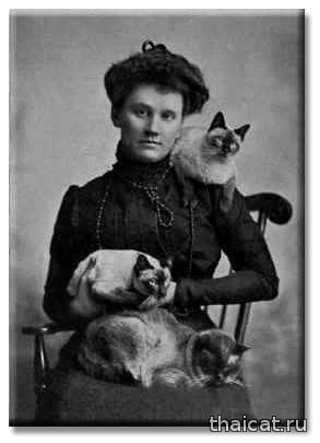 Миссис Робертс Локе и ее коты Халиф, Сиам и Бангкок (фото С.С. Финли, Чикаго)