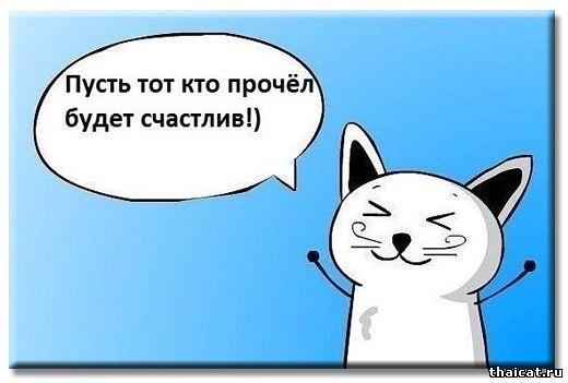 Котики против печальки