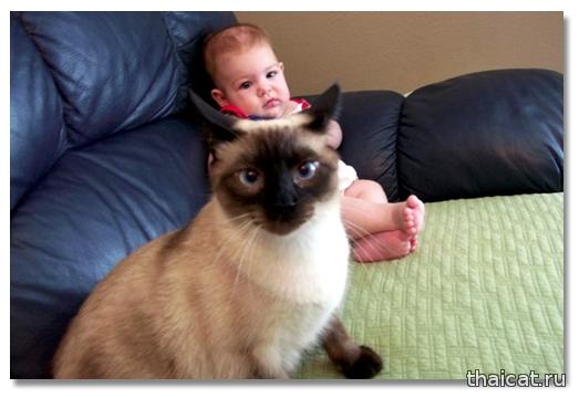 Сиамский кот Тоби и малышка Виллу Фасолинка