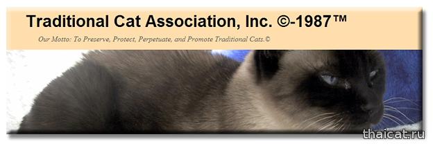 Дегенерация сиамских кошек