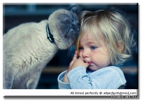 Как воспитание котенка готовит вас к воспитанию ребенка?