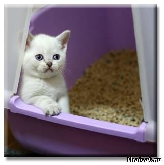 Маленького плачущего котёнка, только что отобранного от мамы, так соблазнительно взять к себе под бочок в постель. Не стоит удивляться, если он по привычке начнёт писать вам под бок, ожидая, что вы, как приёмная мама, всё подлижете и уберёте. Наказывать его ещё не за что.