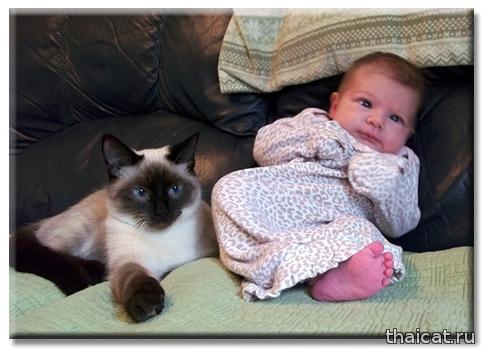 Осторожно, этот кот что-то замышляет