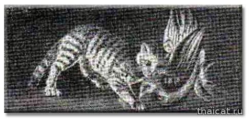 Мозаика, найденная в Помпеях, показаывает болотную рысь на охоте