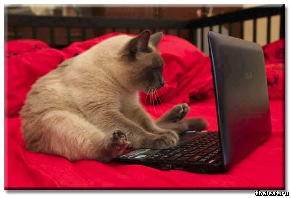 Как сделать сайт питомнику кошек